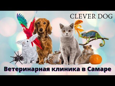 Ветеринарная клиника CLEVER DOG �� �� ЛУЧШИЙ ВЕТЕРИНАРНЫЙ ЦЕНТР в Самаре