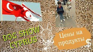 Цены на продукты. Реально ли купить мясо? Турецкий Кипр 2019. Выставка собак.