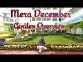 Mera December Mahine ka Garden Overview Dekhiye ( Hindi / Urdu )