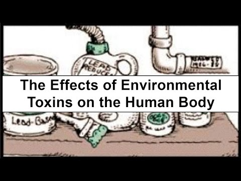 The Effects of Environmental Toxins on the Human Body