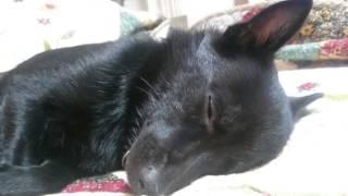 久しぶりの動画アップ。ひたすら眠そうです。 クーのブログ:熊犬生活日...