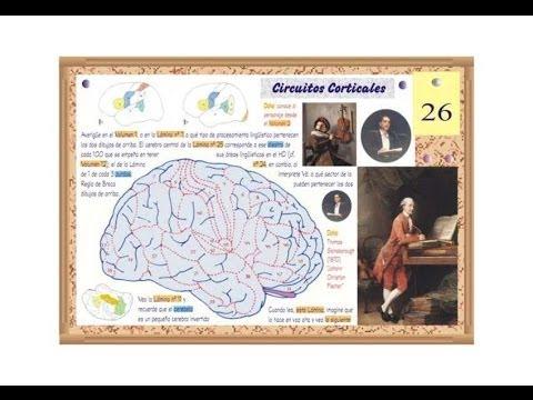 Lesiones Cerebrales en Músicos e Instrumentistas - Prof. Manuel Lafarga