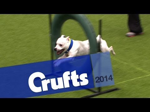 Kennel Club Novice Cup | Agility | Crufts 2014