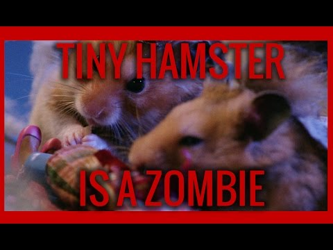 Tiny Hamster is a Zombie! (Ep. 11)