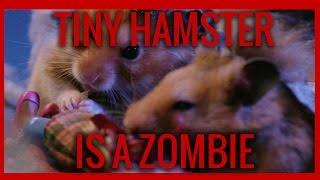 マッドサイエンティストがハムスターをゾンビ化。モグモグハムスターのハロウィンナイト