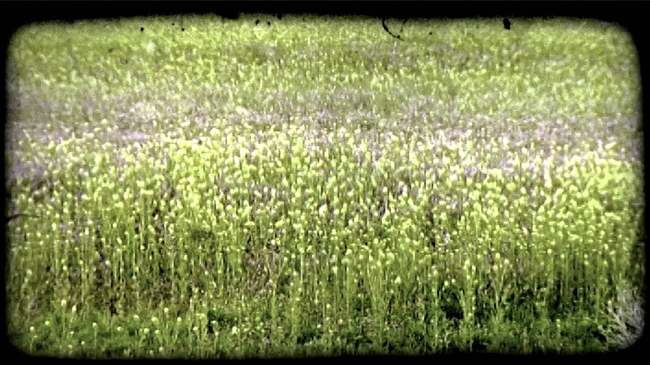 Grasses And Flowers In Field Vintage Stylized Video Clip Youtube