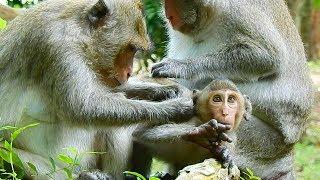 Elsa monkey & Jane mom groom Janet with healthy care | Monkey Daily 4552