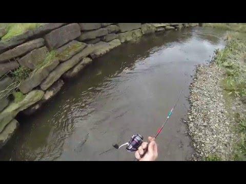 Big Trout,small Stream. Trout Fishing In Ireland 2016 . Pescuit De Pastrav In Irlanda