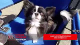 Харьковский клуб '' Союз - Віват'' проводит национальную выставку собак всех пород CAS-UA