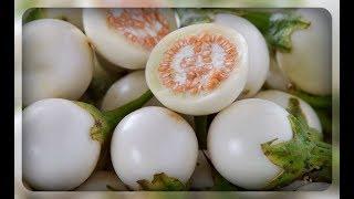 Белые баклажаны, почему их стоит посадить ??? Мои любимые сорта !!