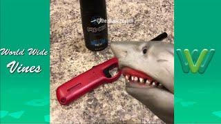 New Shark Puppet Instagram Videos 2019 | Funny Shark Puppet Videos 2019 #2