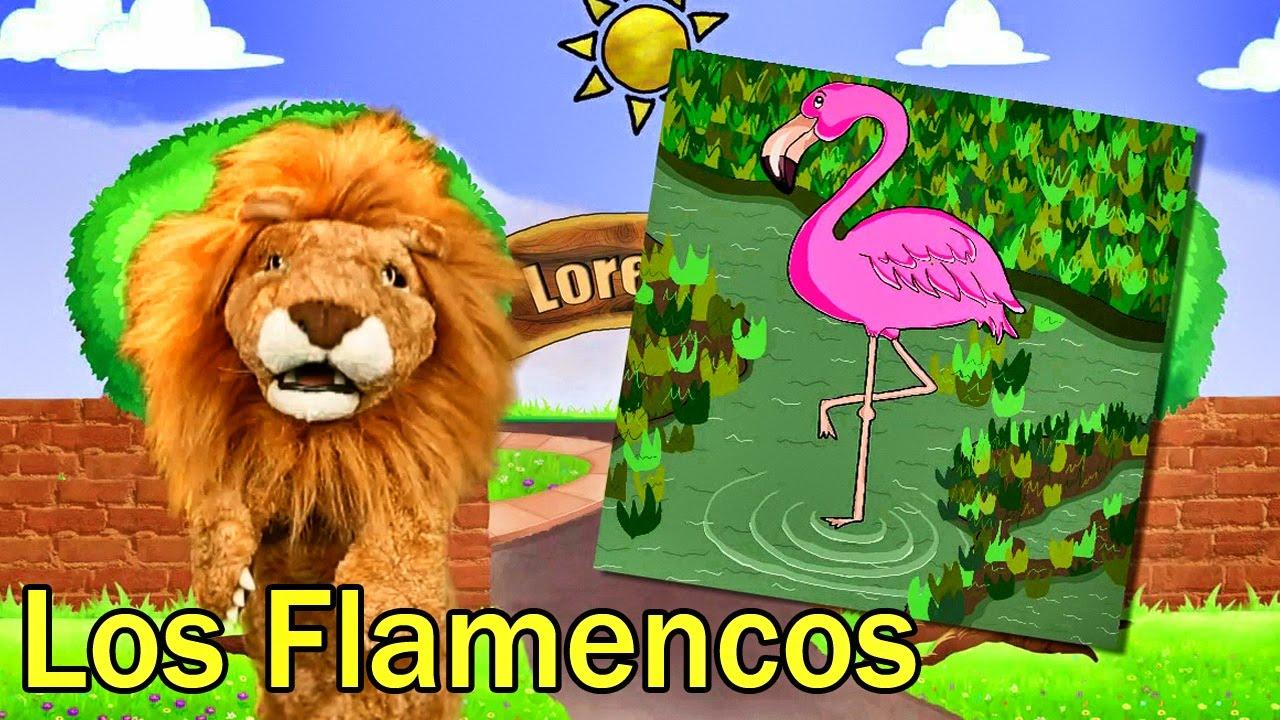 Los Niños Conocen a Los Flamencos - Videos y Canciones Infantiles Educativos - Lorenzoo El León