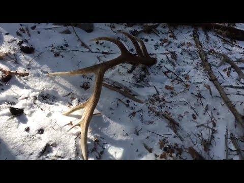 Season 2 EP 1 January Late Season Browns in NM