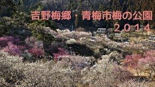 吉野梅郷・青梅市梅の公園2014 〜 Ome City Plum Park 2014