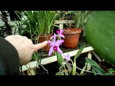 Orchid plants in bloom at Dublin Botanic Gardens