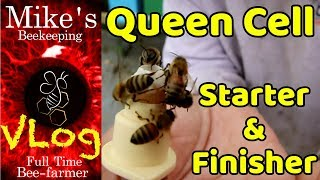Queen Cell Starter / Finisher Colony Transferring Queen Cells