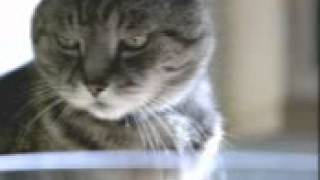 cat vs fish, world Best , Cool Commercials , amazing videos