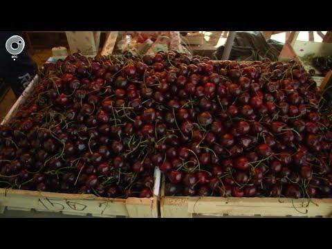 В Новосибирск привезли первую черешню и абрикосы. Насколько безопасны азиатские фрукты и ягоды?