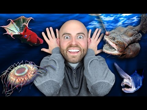 10 STRANGEST DEEP SEA CREATURES Ever Discovered!