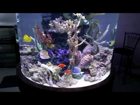 300 gallon circular saltwater fish tank youtube for Marine fish tanks