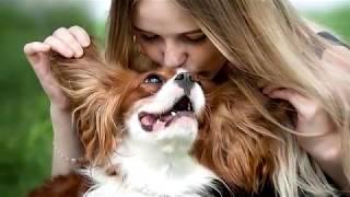 Фотосессия с собакой от замечательной заводчицы. Кавалер Кинг Чарльз спаниель Тим.