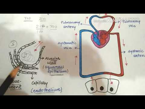 Mechanism Of Exchange Of Gases/very Simplified Lecture.