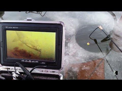 поведение леща подо льдом. подводные съёмки