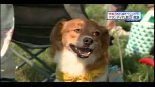 名もなきペットたち:「殺処分」犬を救う