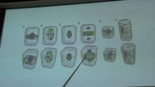 тимонин А. К. - Высшие растения - Общее устройство растительной клетки