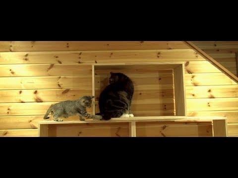 棚で遊ぶまるとチビはな。-Maru&Little Hana play on the shelf.-
