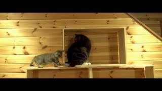 棚で遊ぶまるとチビはな。-Maru&Little Hana play on the shelf.-