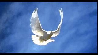 Фото альбом серпасто выворотных голубей