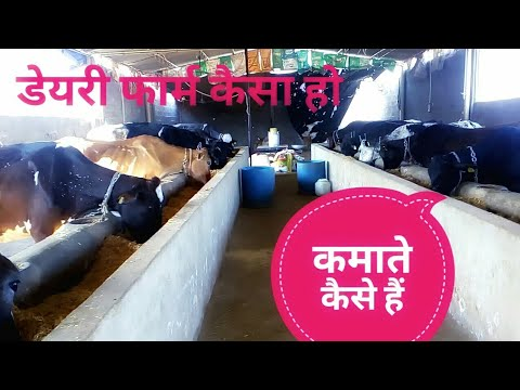गाय पालन,How to Start Dairy Farm Business In Hindi.Dairy Farming Full Detail.