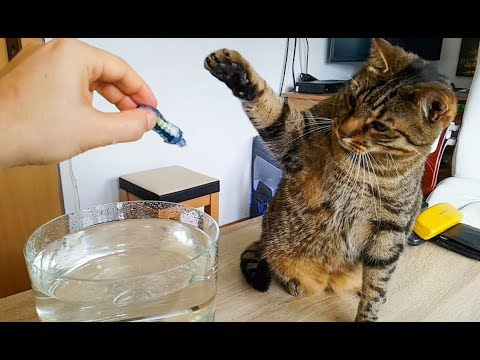 Cats With Hexbug Aquabots Toys