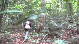 【カンボジア】アオラル山 登山2日目#2(第2キャンプ~山頂) 標高1813mへ