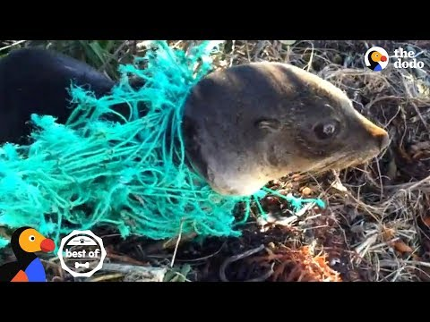 Animals Trapped In Fishing Nets Get Rescued Just In Time | The Dodo