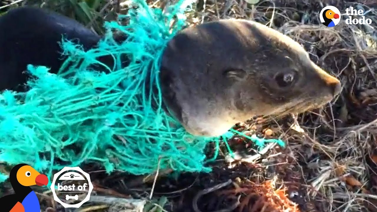 Animals Trapped In Fishing Nets Get Rescued Just In Time