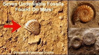 Seven Undeniable Fossils Found On Mars!