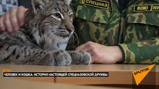 Спецназовец Алексей Липлянин в армии ухаживает за настоящей рысью