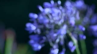 Красивая музыка. Красивые цветы))