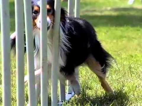 International Border Collie Championship 2013 SLOW MOTION MOVIE by www.DogSports.cz