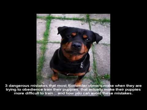 best-way-to-train-a-rottweiler-puppy-guide