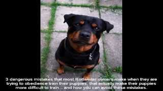 Best Way To Train A Rottweiler Puppy Guide