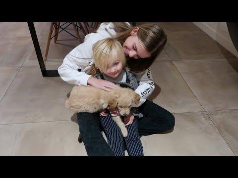 OMG BIBI HEEFT EEN PUPPY GEKREGEN 😍 VLOG 295 ⭐ QUEEN OF JETLAGS