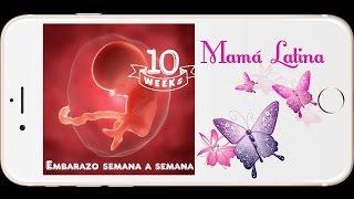 SEMANA 10 DE EMBARAZO | 10 WEEKS PREGNANT | 3 MESES DE EMBARAZO | DESARROLLO DE TU BEBE