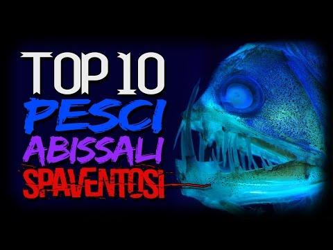 TOP 10 Mostri Marini degli Abissi più INQUIETANTI