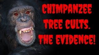 Strange Ritual Behaviour in Chimps Caught on Hidden Cameras. Is this the origin of religion?