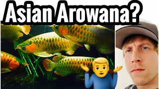 Asian Arowana Fish in the US? But Why?