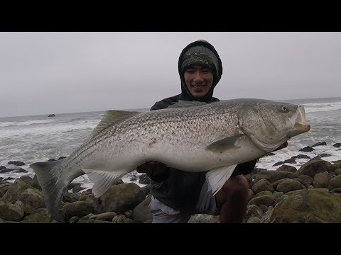 HUGE Striped Bass Surf Fishing From The Rocks