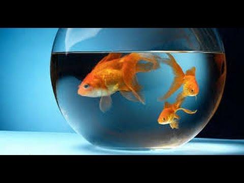 VASTU - Fish Aquarium Removes All Vastu Dosh